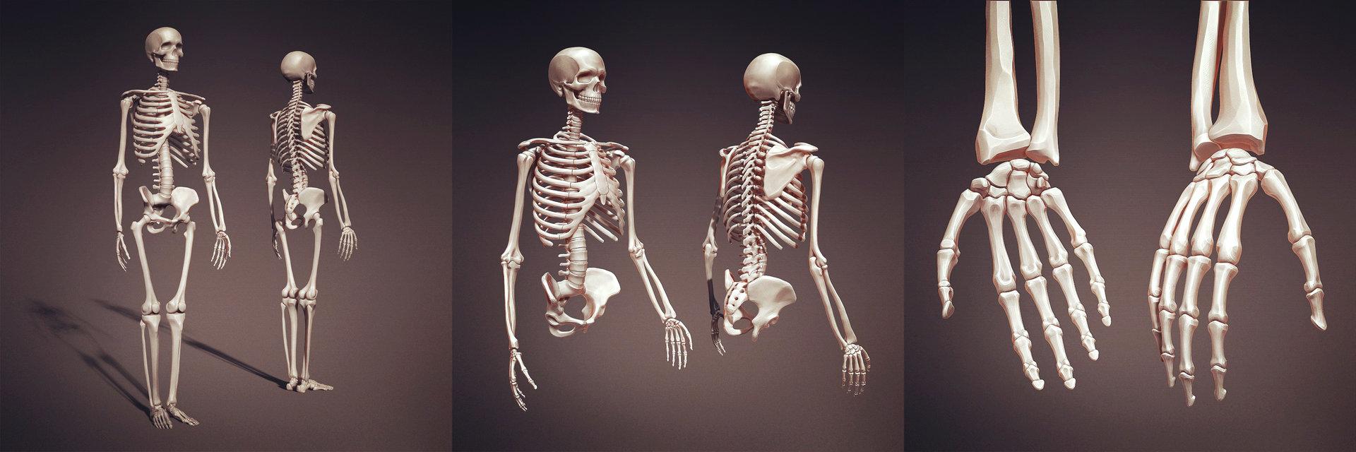 Leonid kuzyakin cuba 0011 skeleton study22