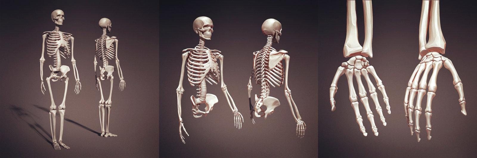 Anatomy Practice #1 (skeleton)