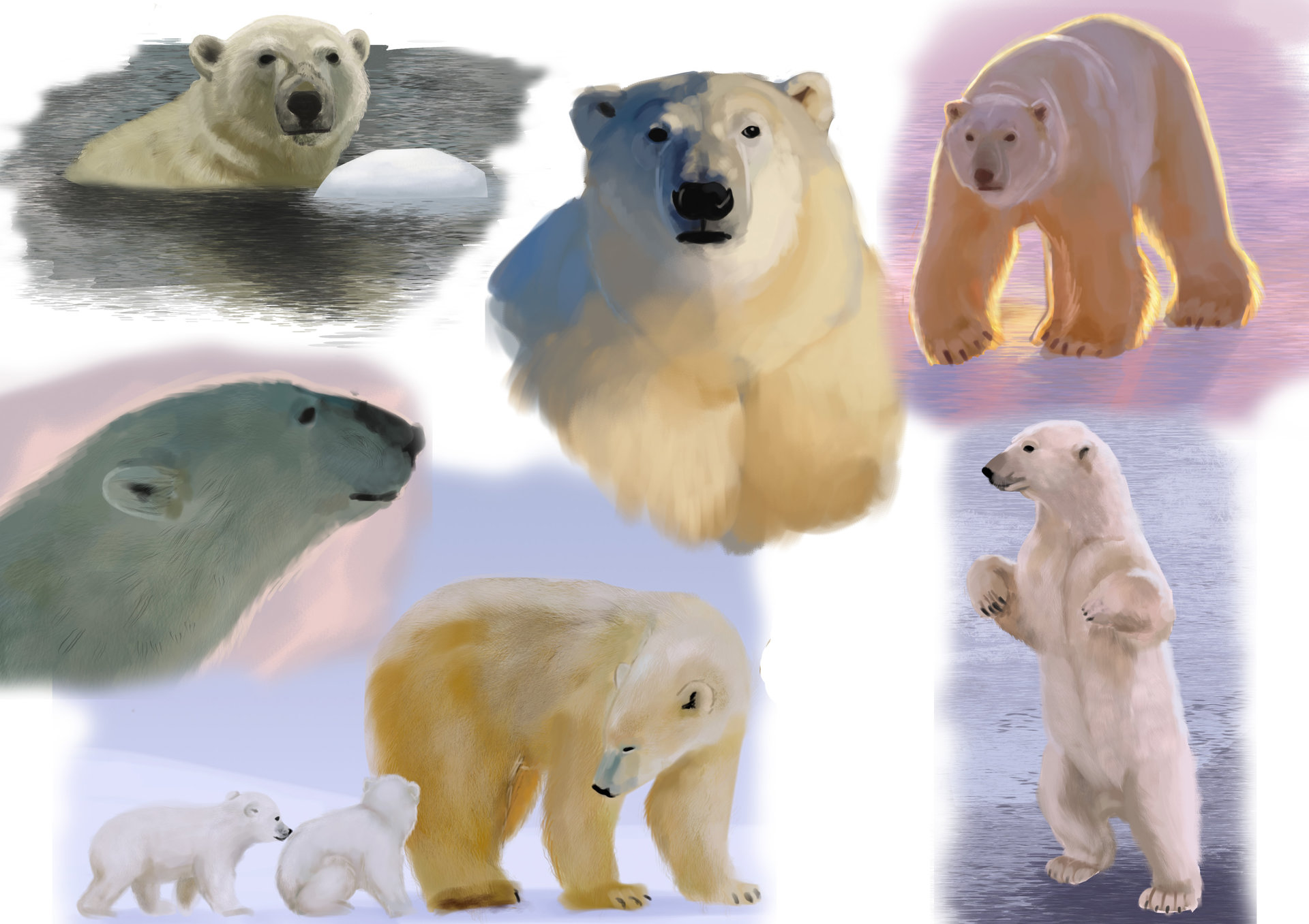 Joanna efenberger polar bears color