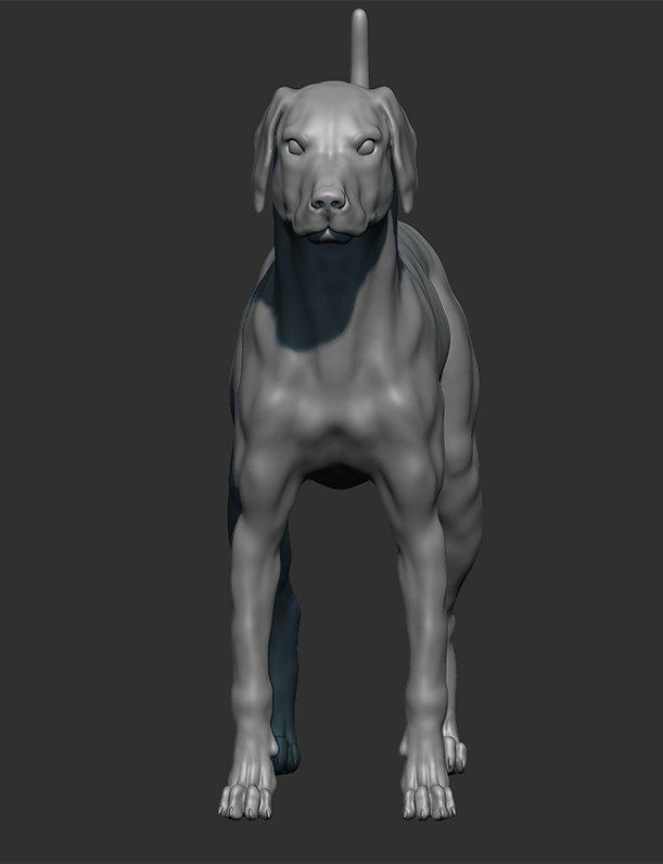 Laura Van Dalen Anatomy Study Of A Dog