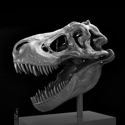 ReX skull study