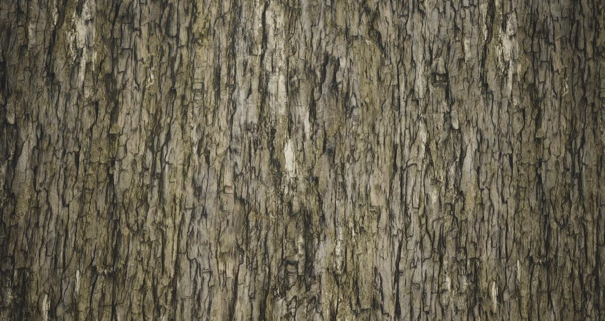 Hugo beyer treebark texture