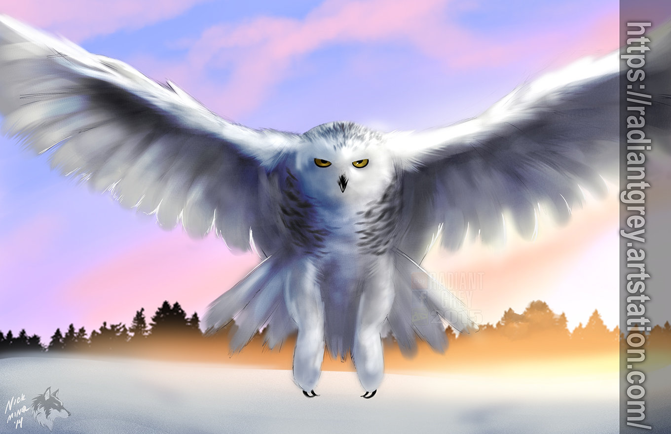 Nick minor snowy owl
