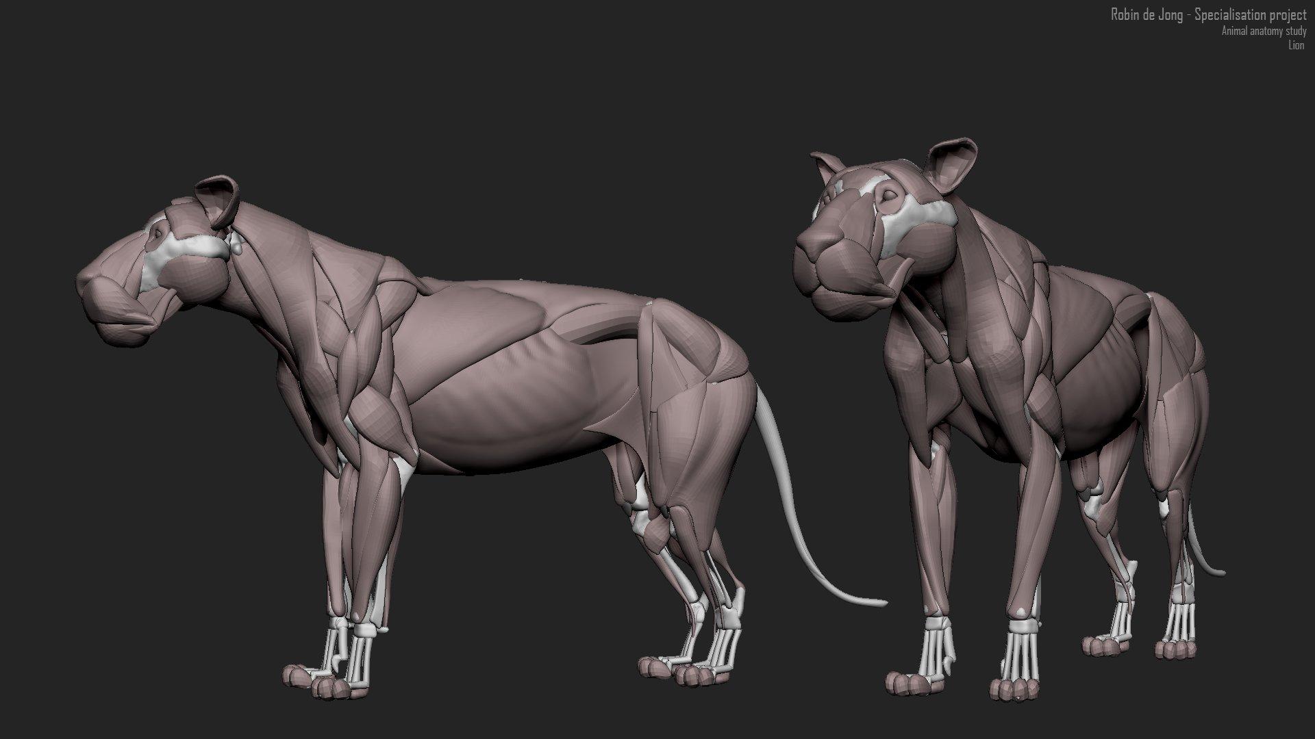 ArtStation - Anatomy studies, Robin de Jong