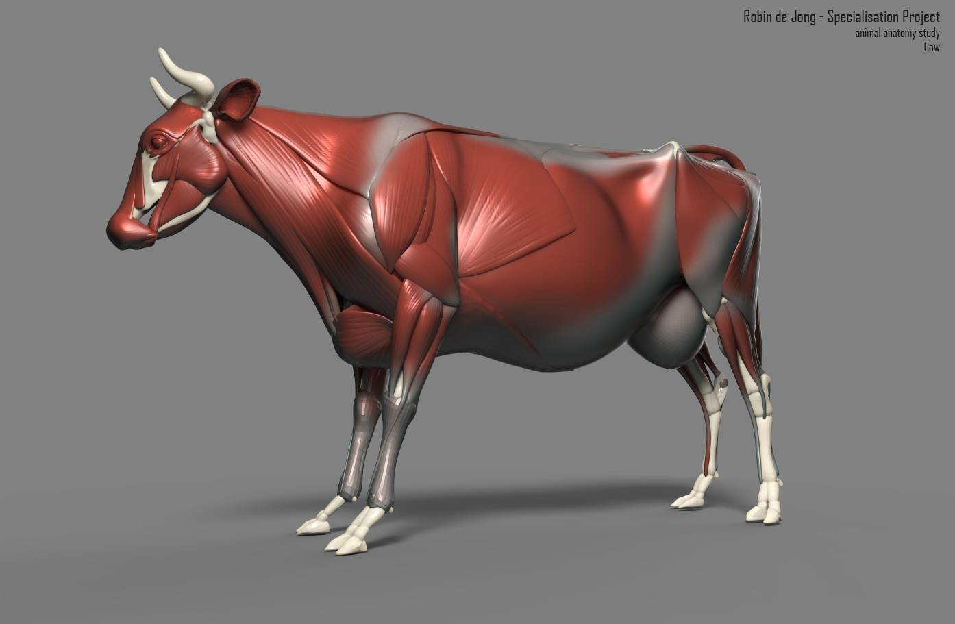 ArtStation - cow anatomy study, Robin de Jong