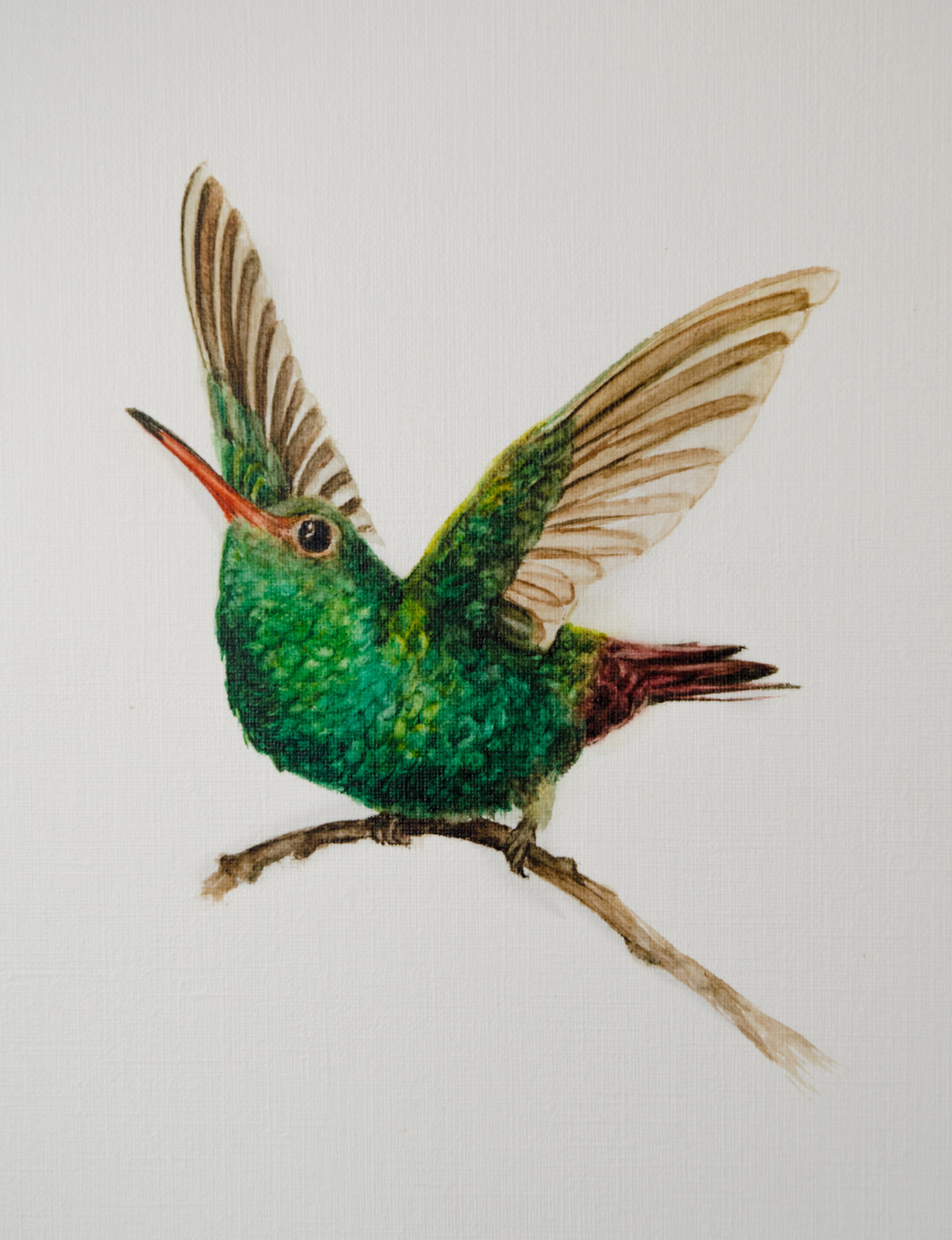 Birds - watercolor