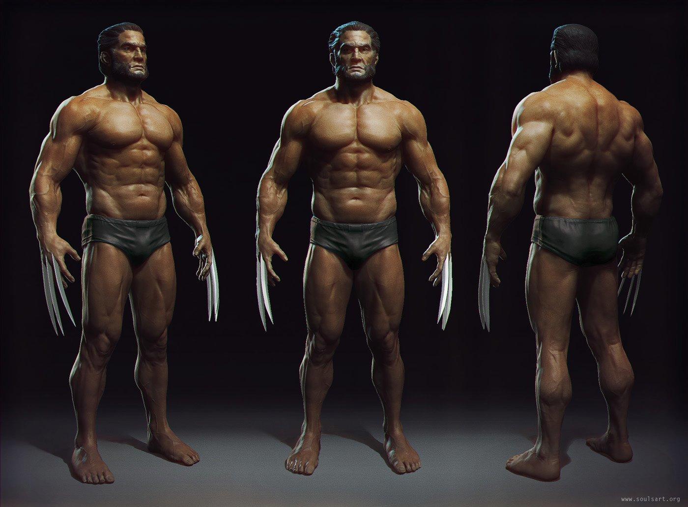 Wolverine Anatomy