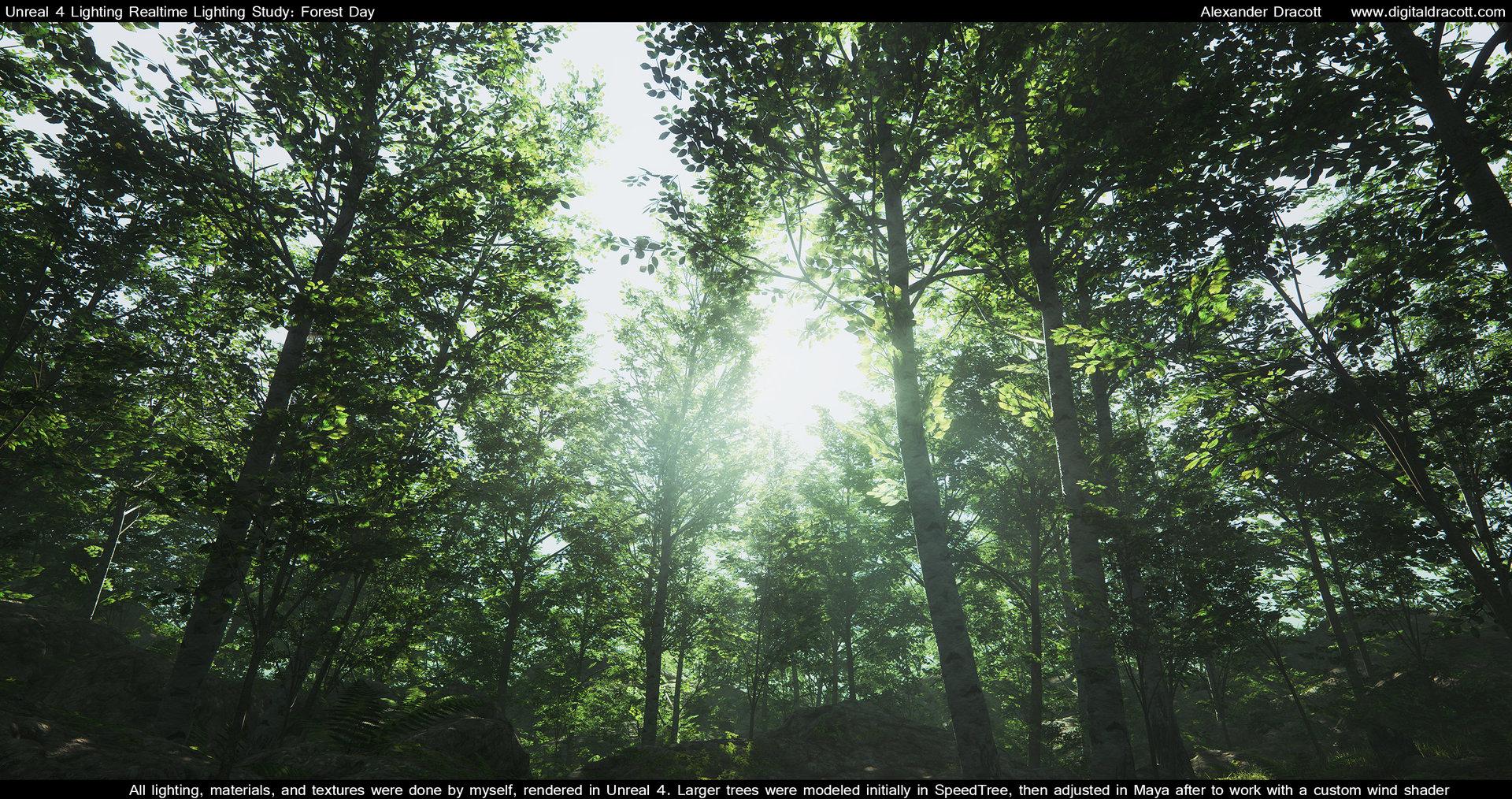 Alexander dracott forest 003