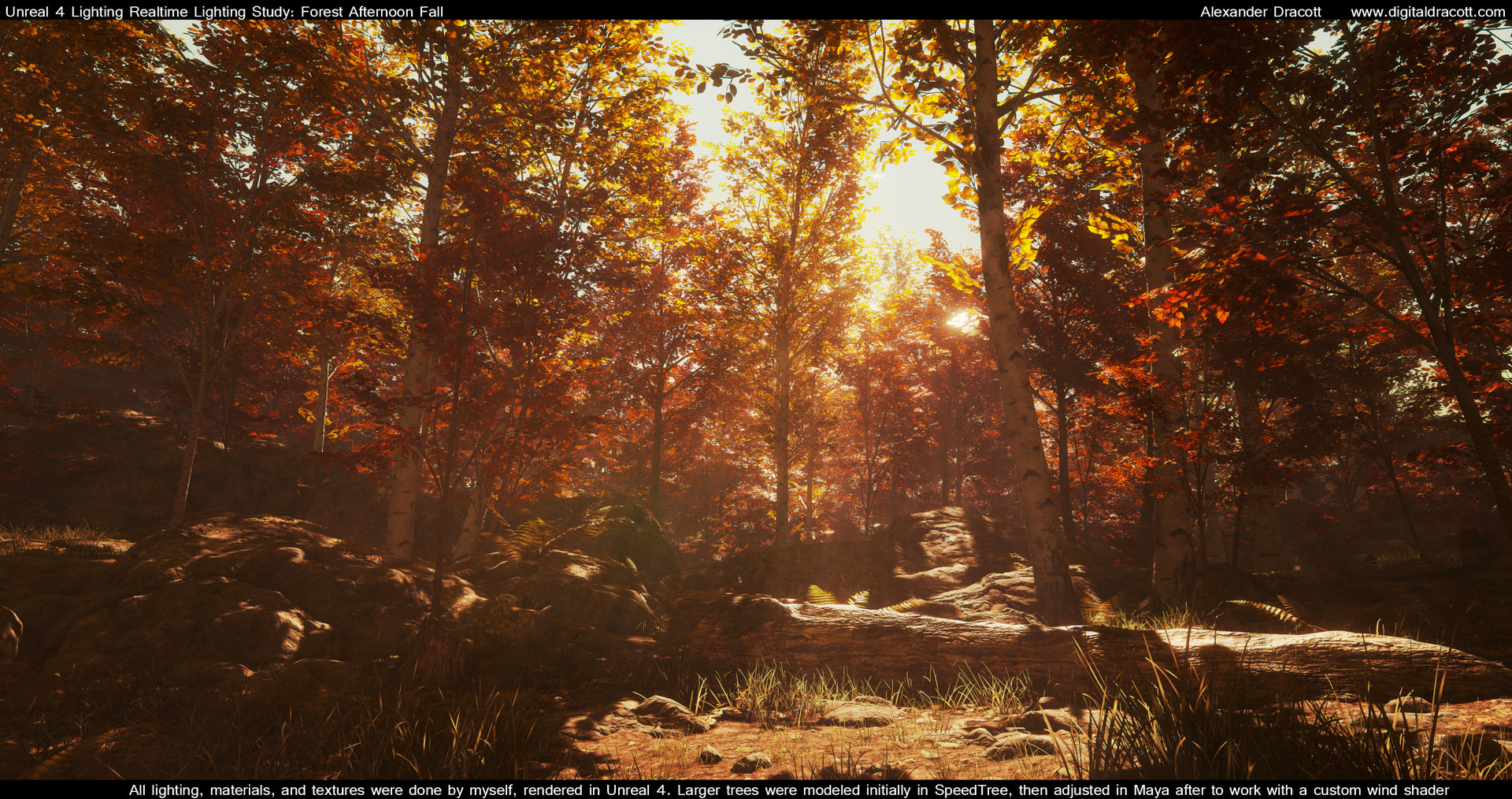 Alexander dracott forest 005