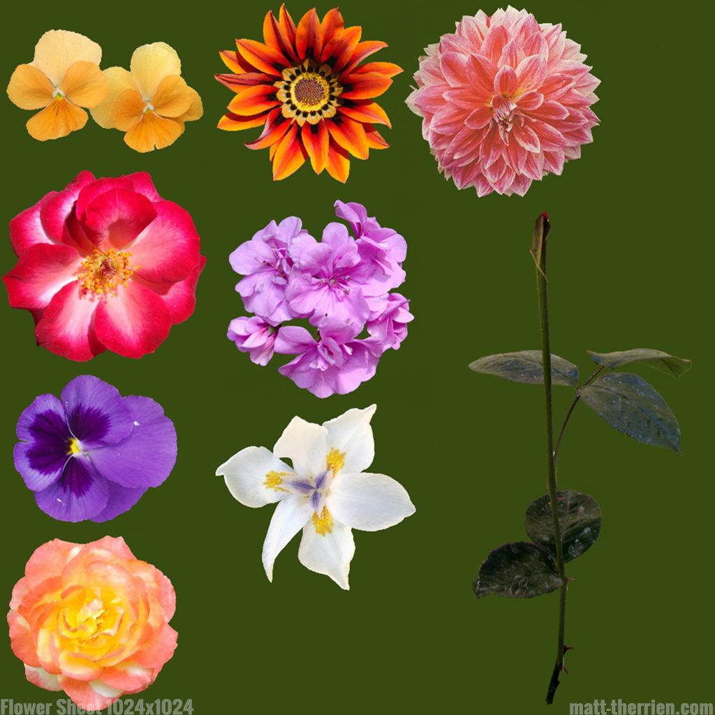 Matt therrien flowersheet