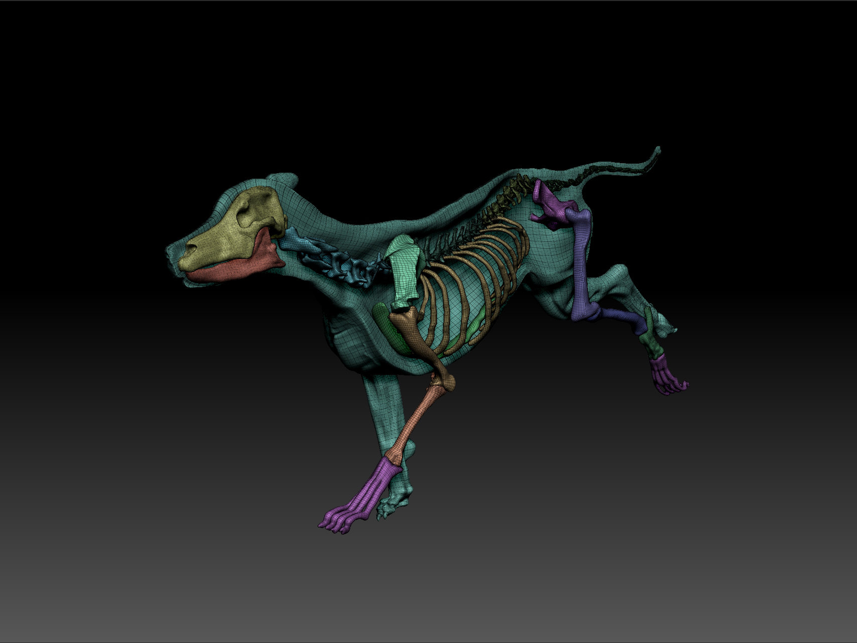 Fine Dog 3d Anatomy Frieze - Physiology Of Human Body Images ...