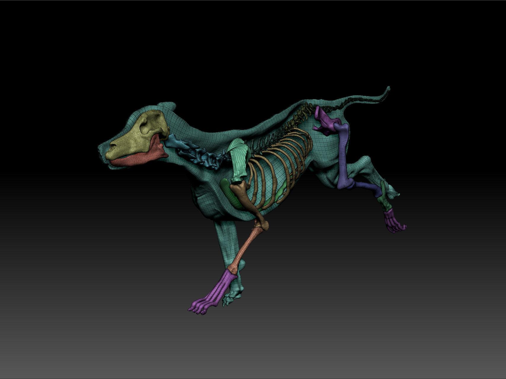 ArtStation - Dog anatomy models for 3d printing, Tom Getty