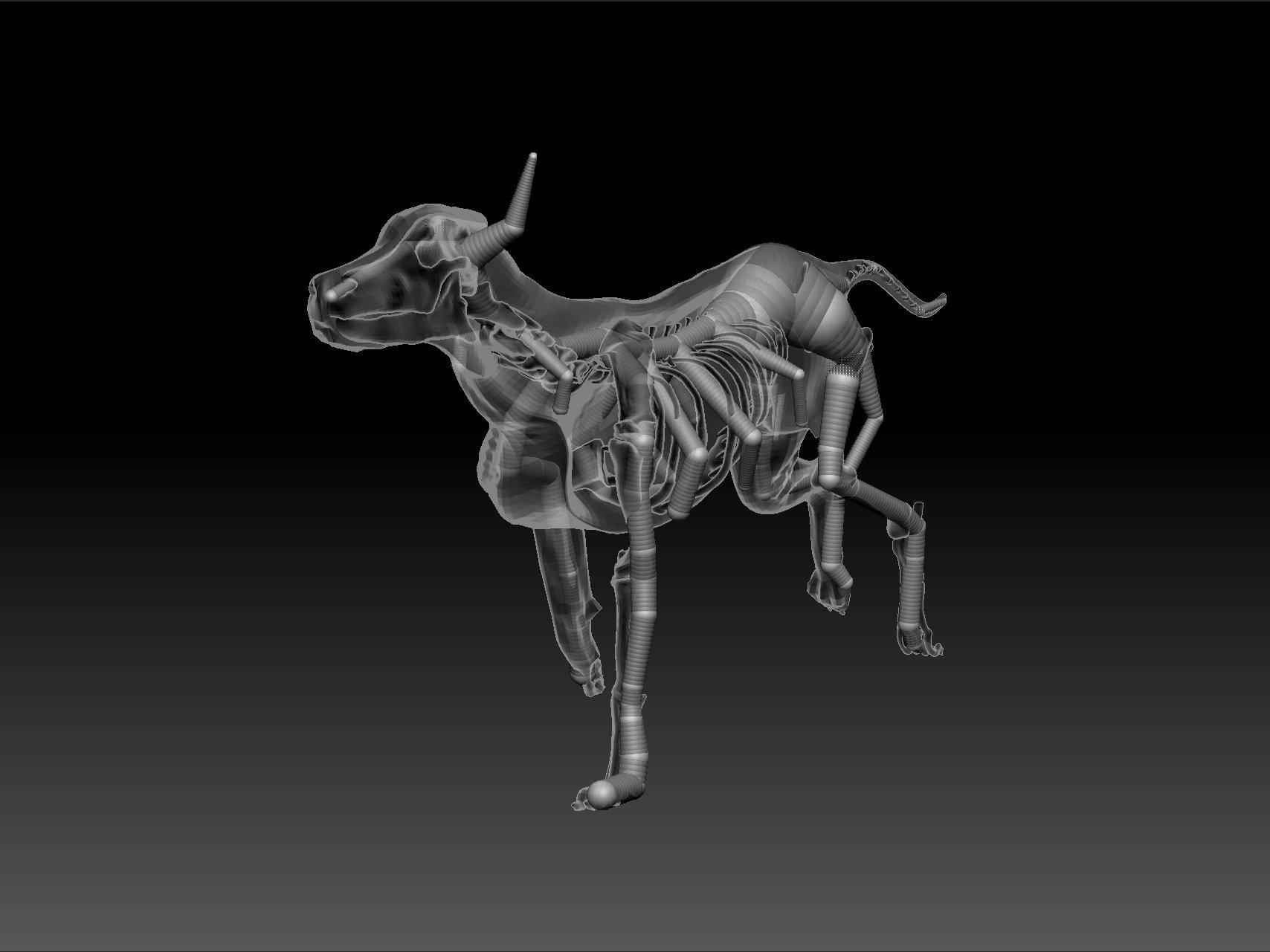 Dog Anatomy 3d Gallery - human body anatomy