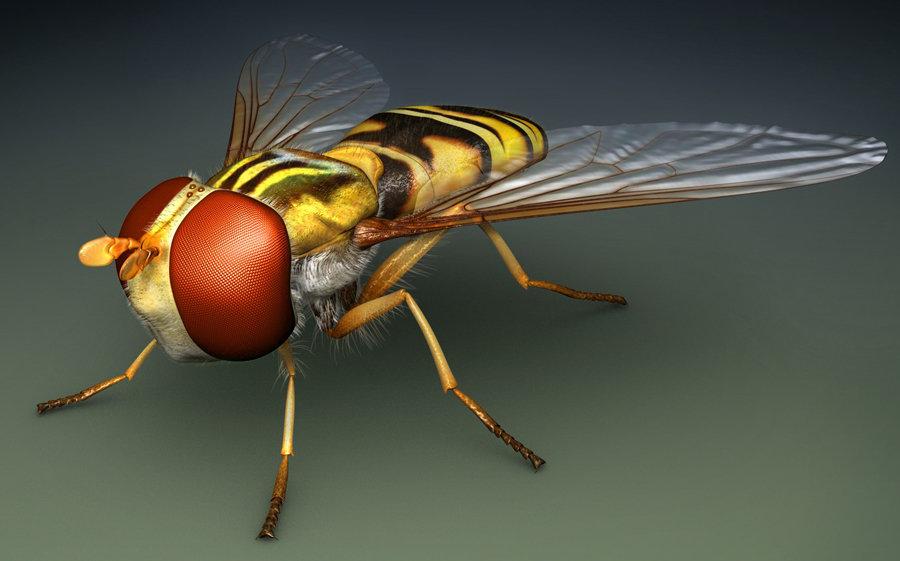 Bill melvin fly1
