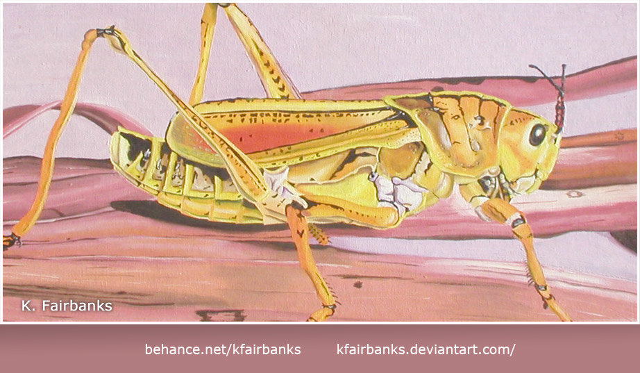 Grasshopper oil painting