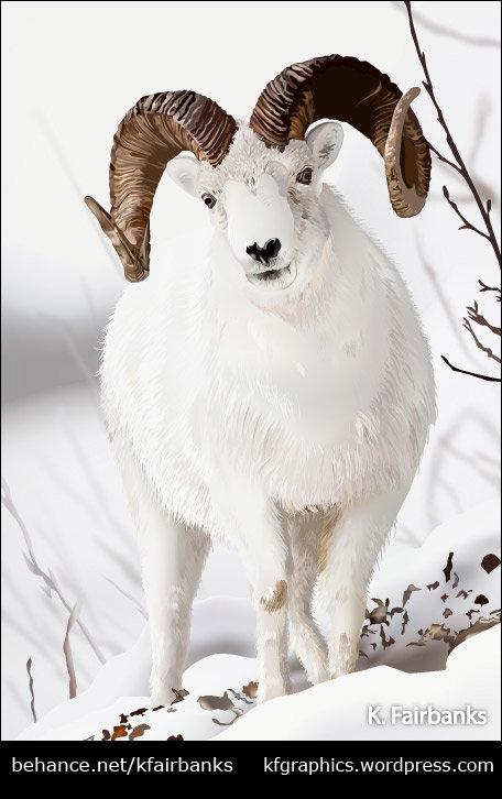 Winter Ram (vector drawing)