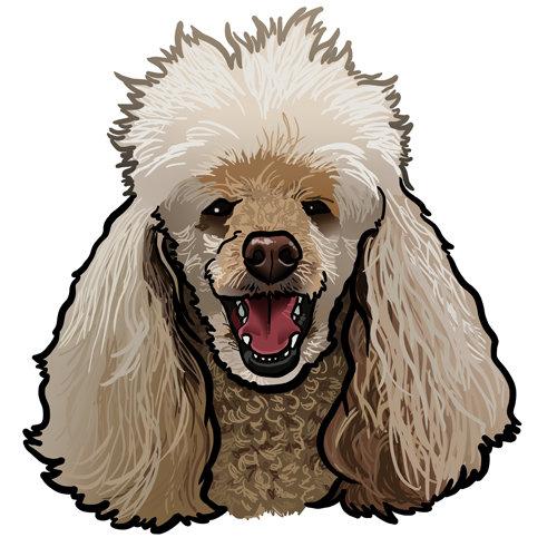 Steve rampton poodle paul