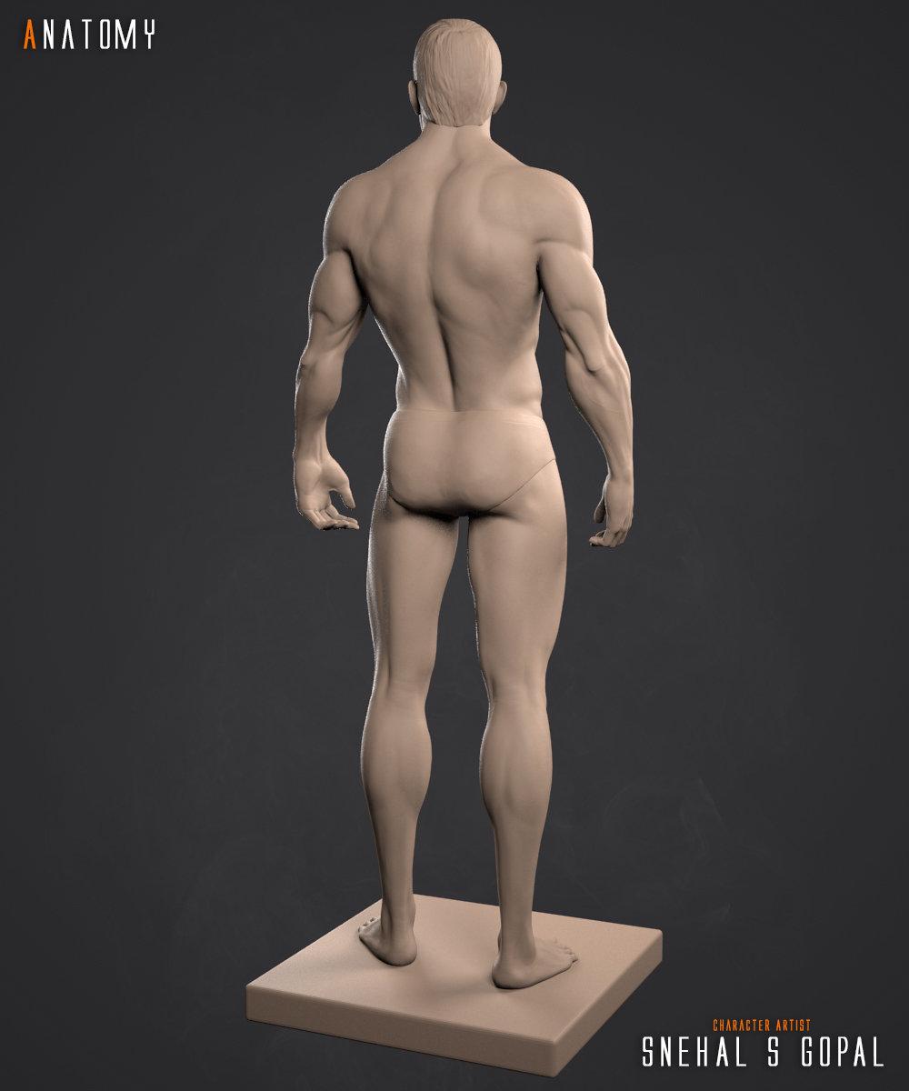 Snehal s gopal anatomy clay back