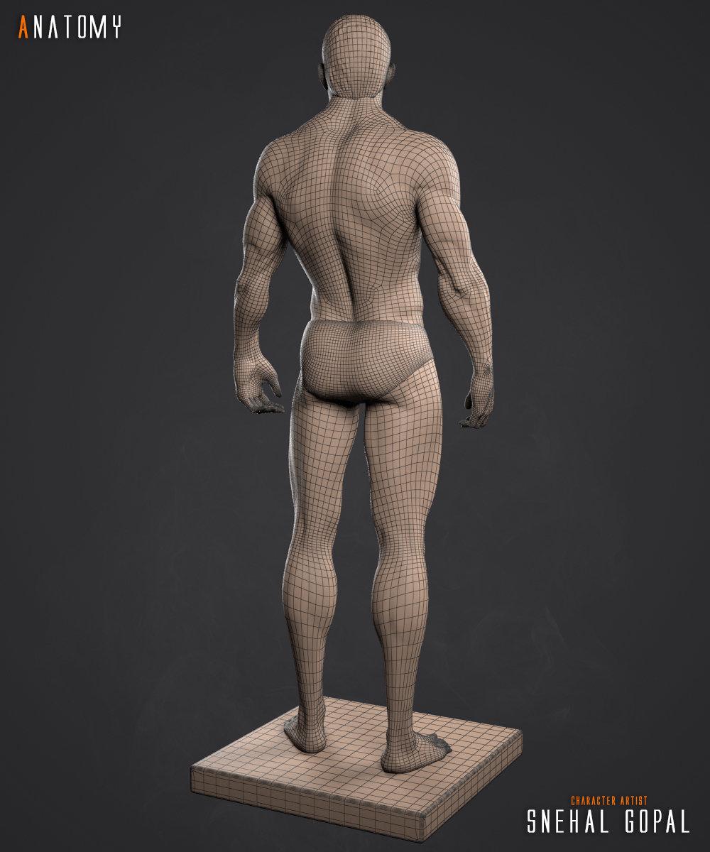 Snehal s gopal anatomy wire back 01