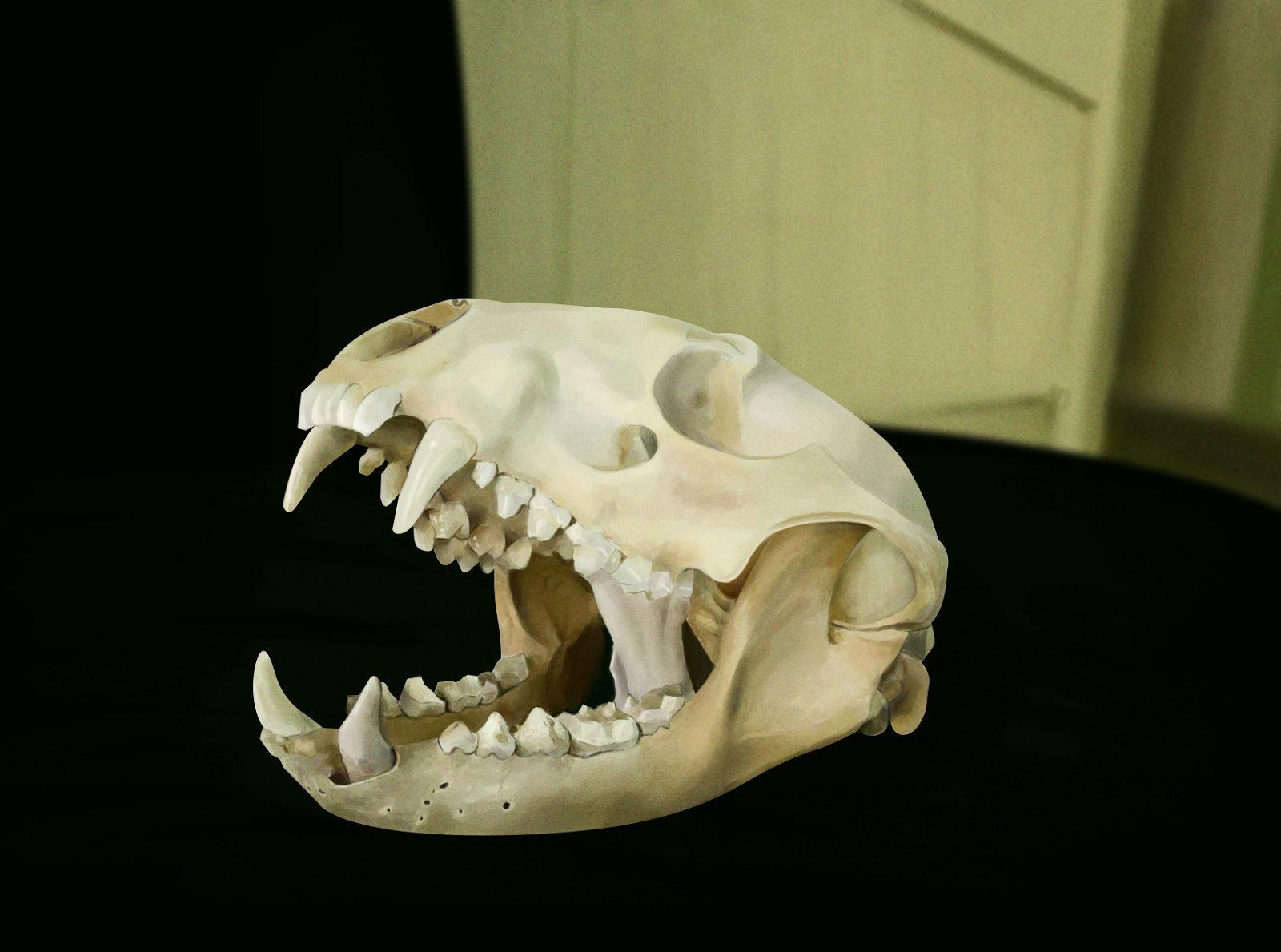 John dervishi skull