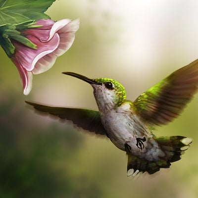 Ruth taylor hummingbird