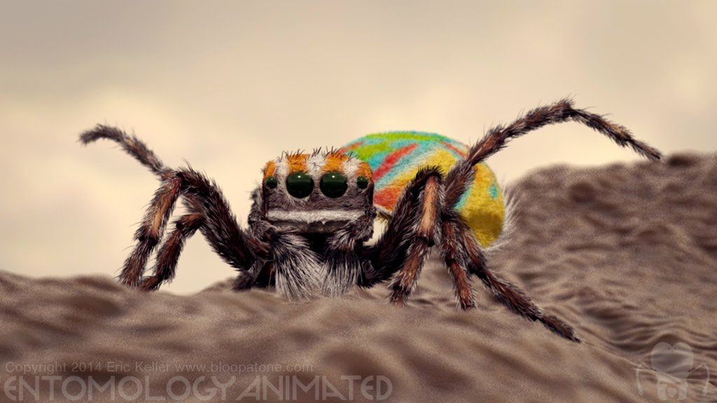 Eric keller peacockspider test render04