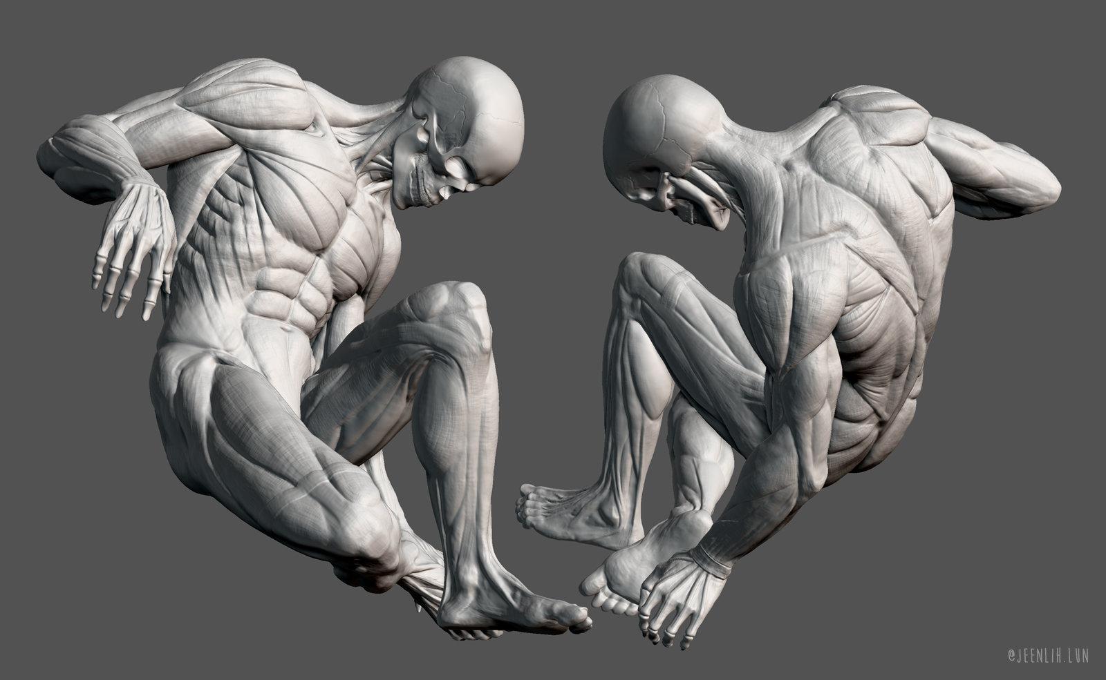 Jeen lih lun anatomy zb2