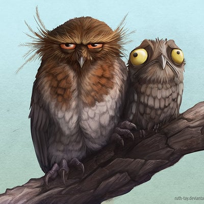 Ruth taylor poyoobird and long whiskered owl
