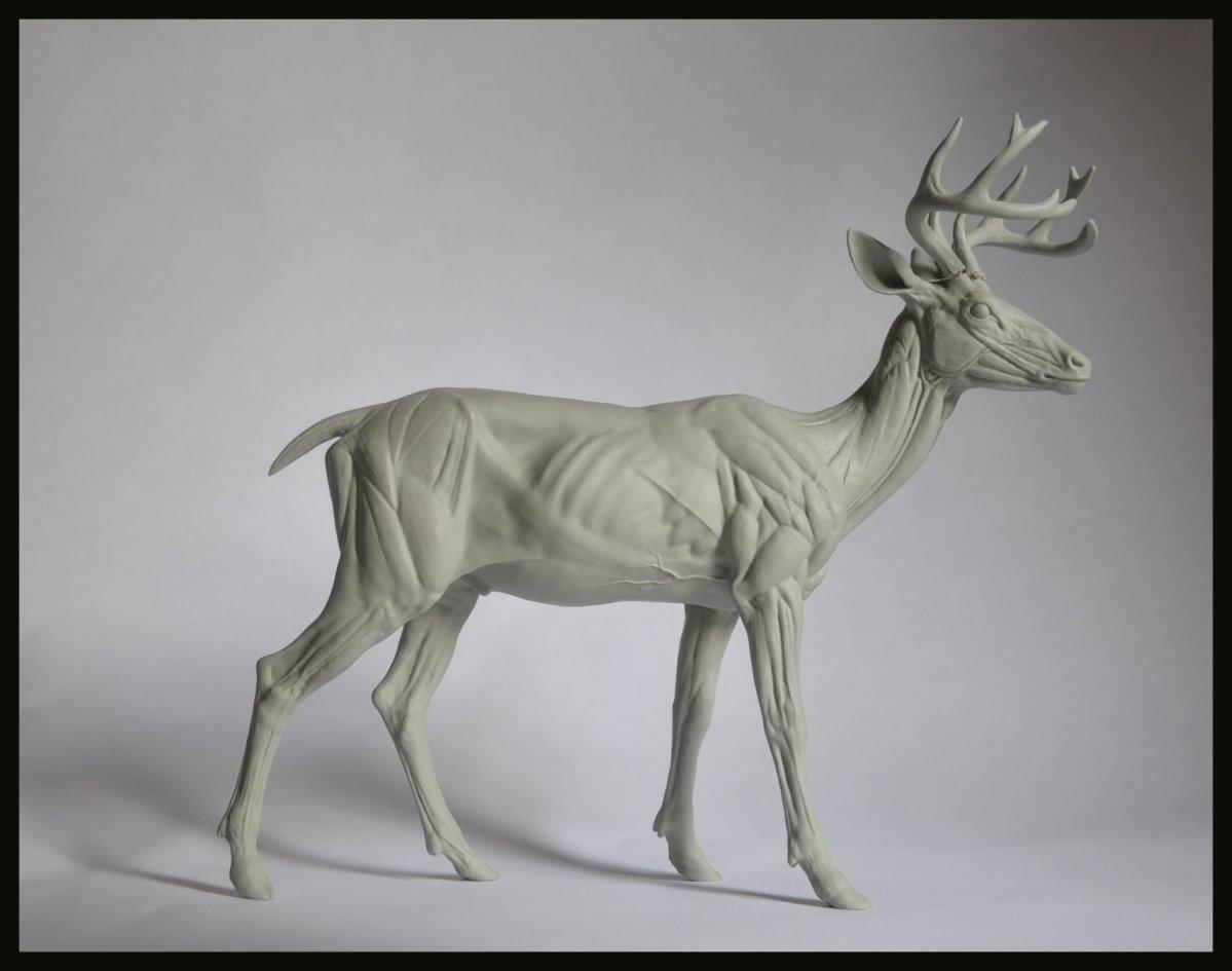 ArtStation - Deer Anatomy Study, Steve Lord