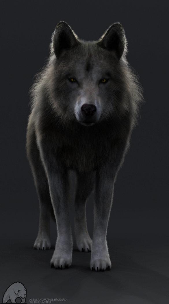 Alessandro Mastronardi - Grey wolf WIP