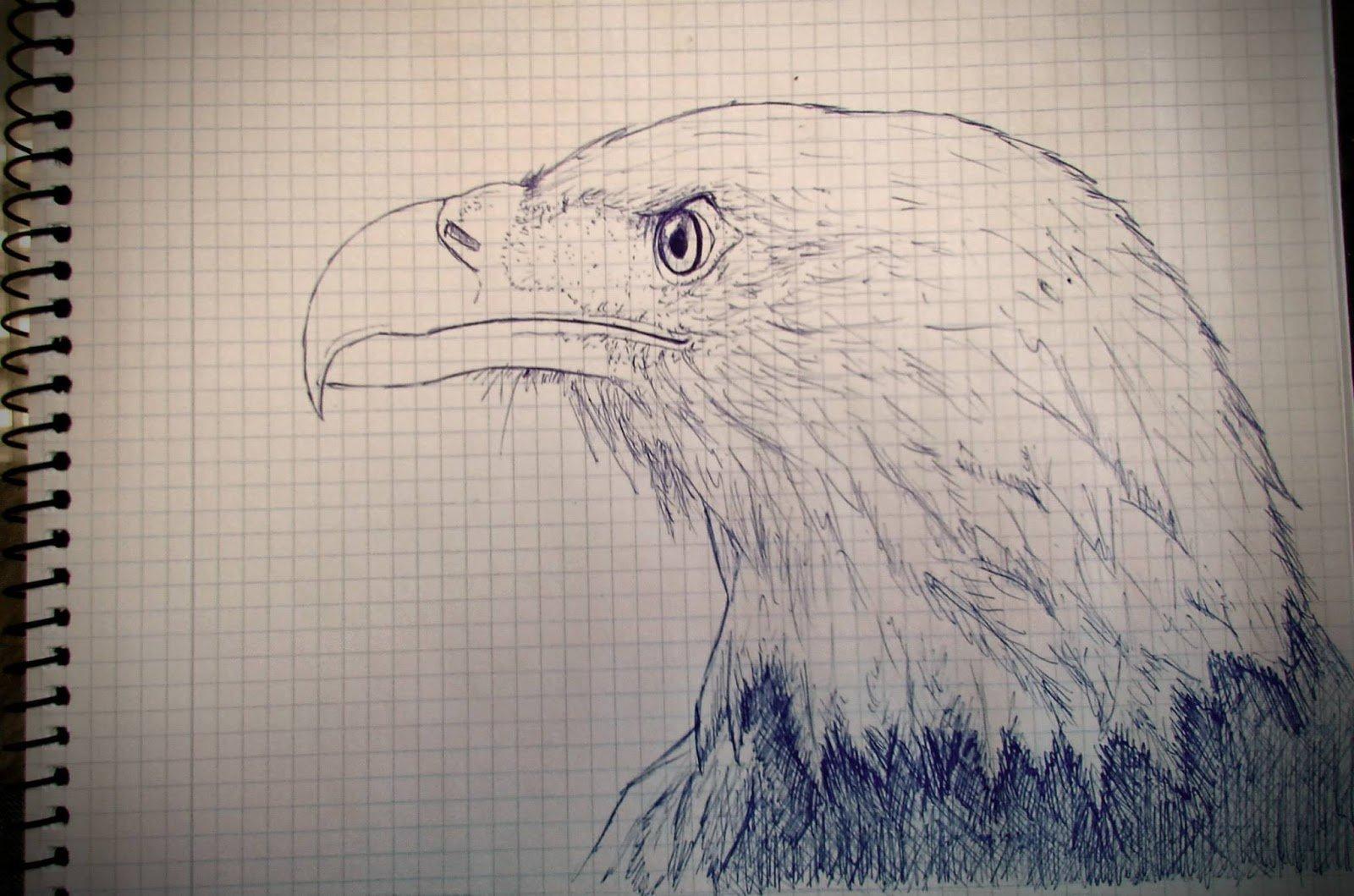 Martin jario bald eagle martinjario