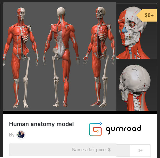 Artstation Human Anatomy Model Free Download Zxz Zac