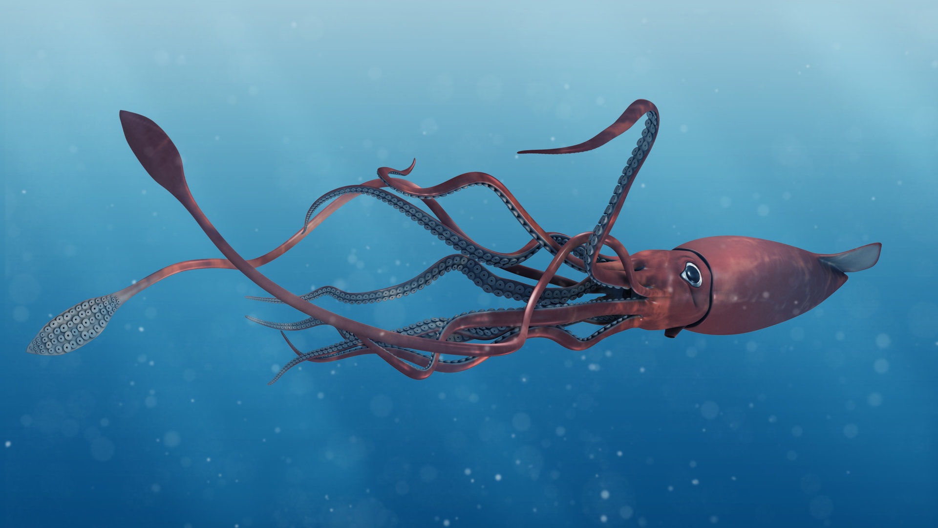 Colossal Squid and Giant Squid pictures the worlds largest invertebrates close ups of the tentacles suckers and hooks they use to catch prey