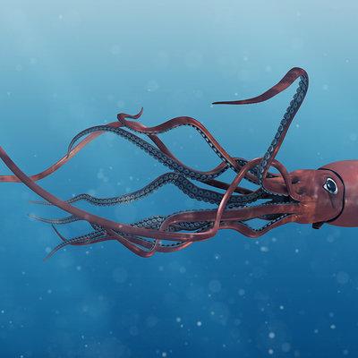 Matt stewart squid 1