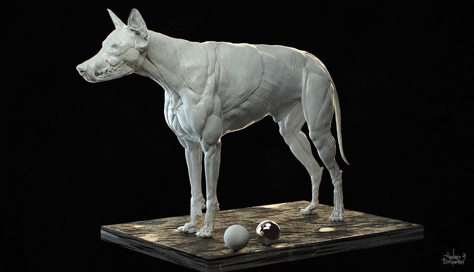 ArtStation - Wolf/Dog muscle system, Andrey Bogomolov
