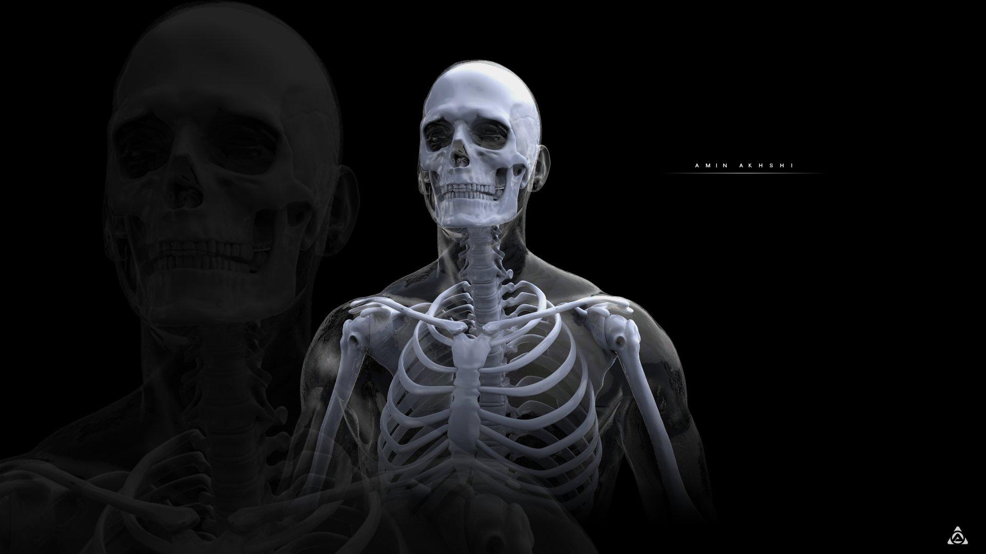 Amin akhshi anatomy study