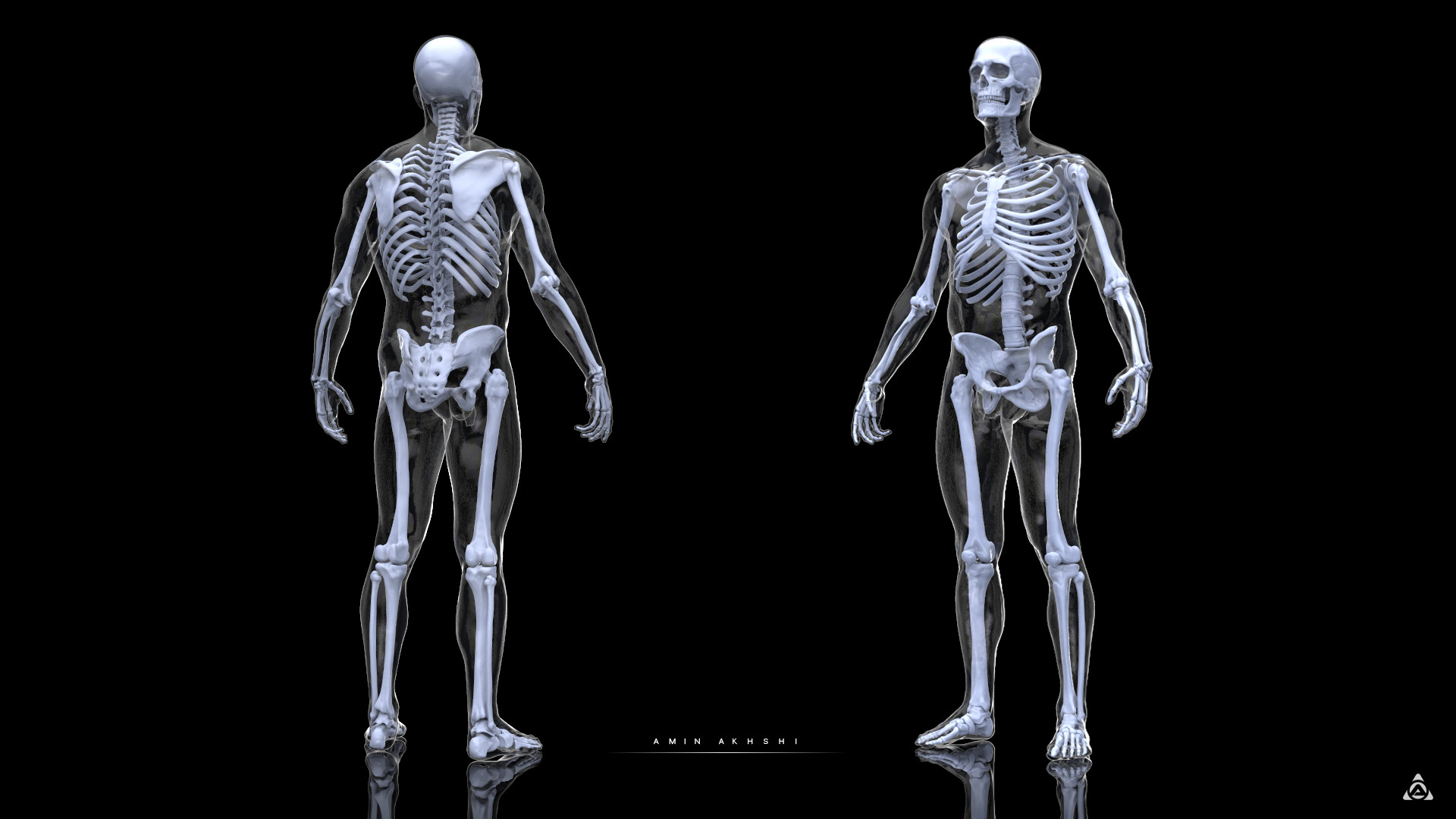 Amin akhshi anatomy study human skeleton