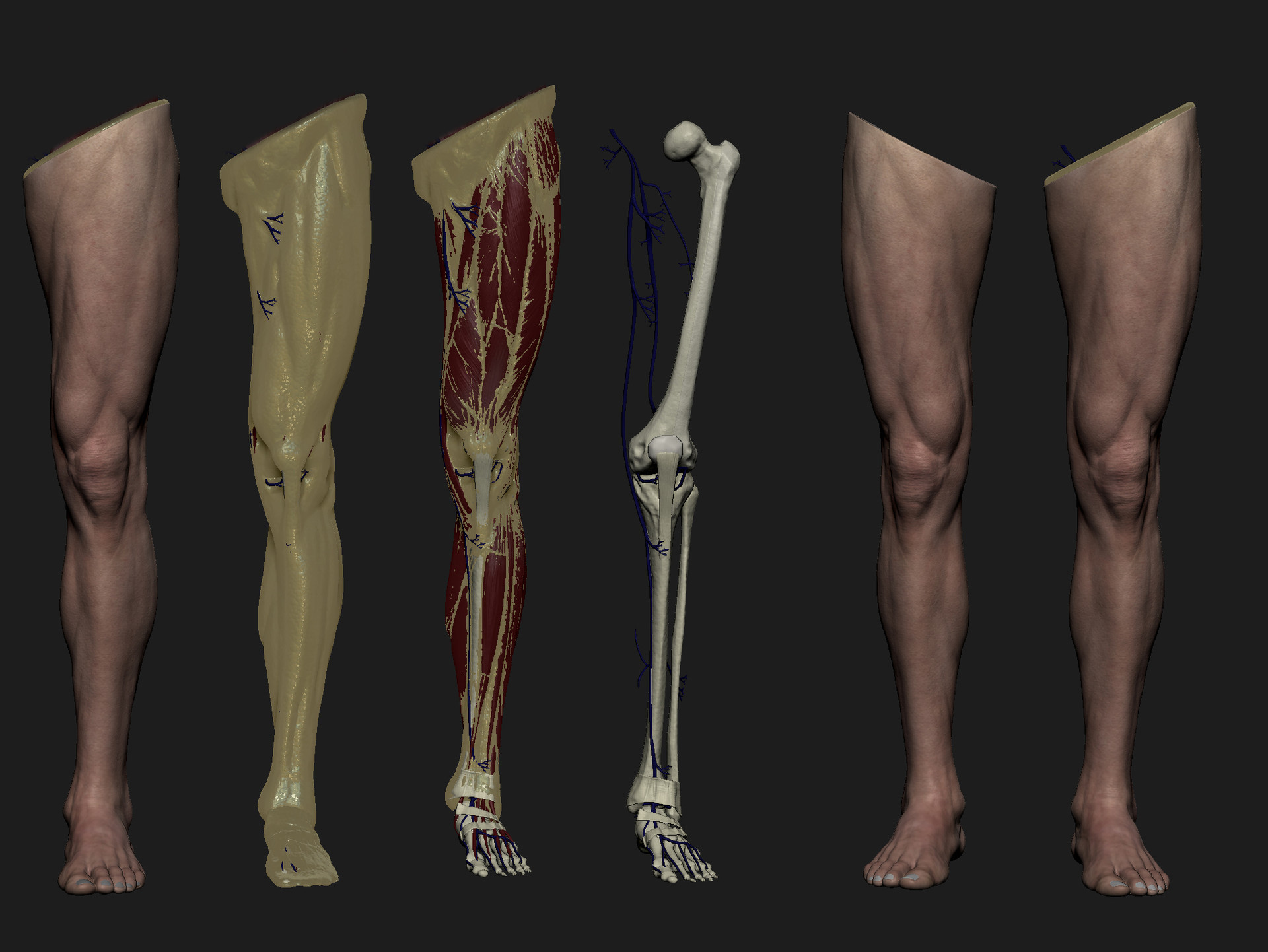 artstation - leg anatomy study., ren manuel, Human Body