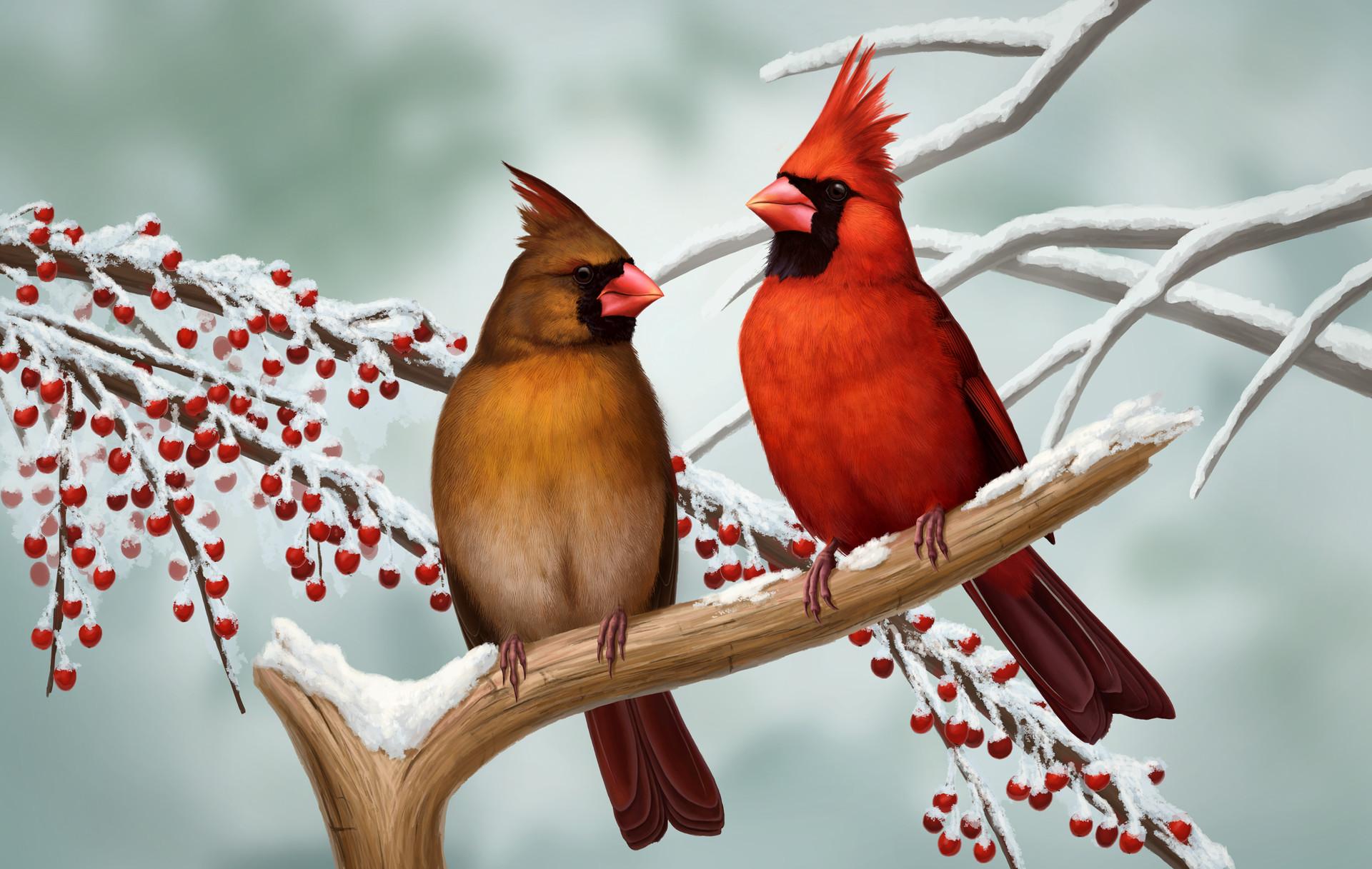 Martina nachazelova nothern cardinal pair25