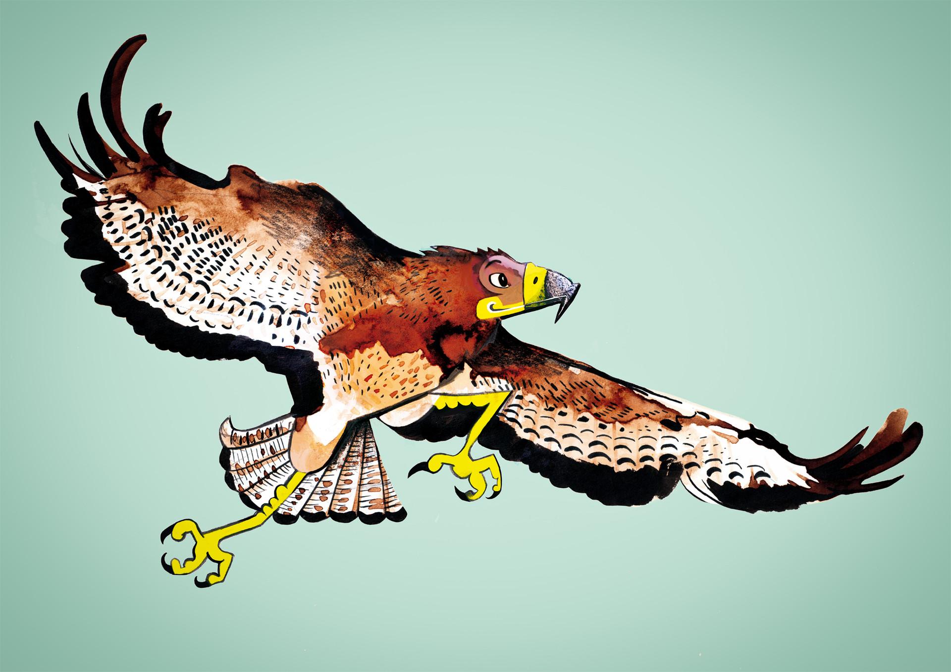 Andy bruyninckx buzzard flattend