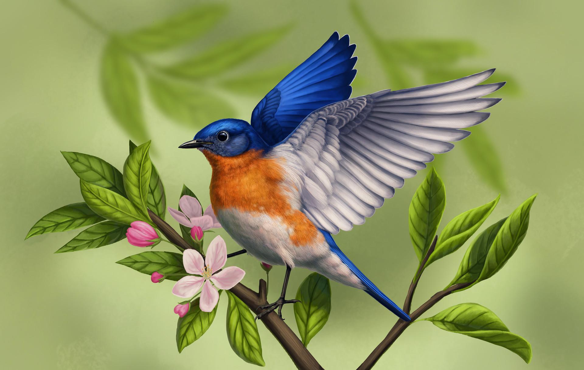 Martina nachazelova eastern bluebird