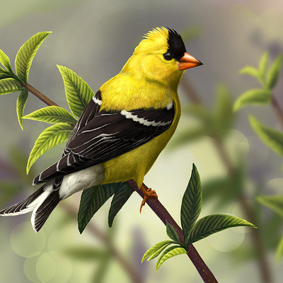 Martina nachazelova american goldfinch