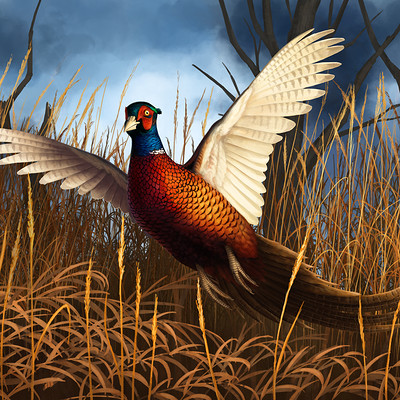 Martina nachazelova pheasant