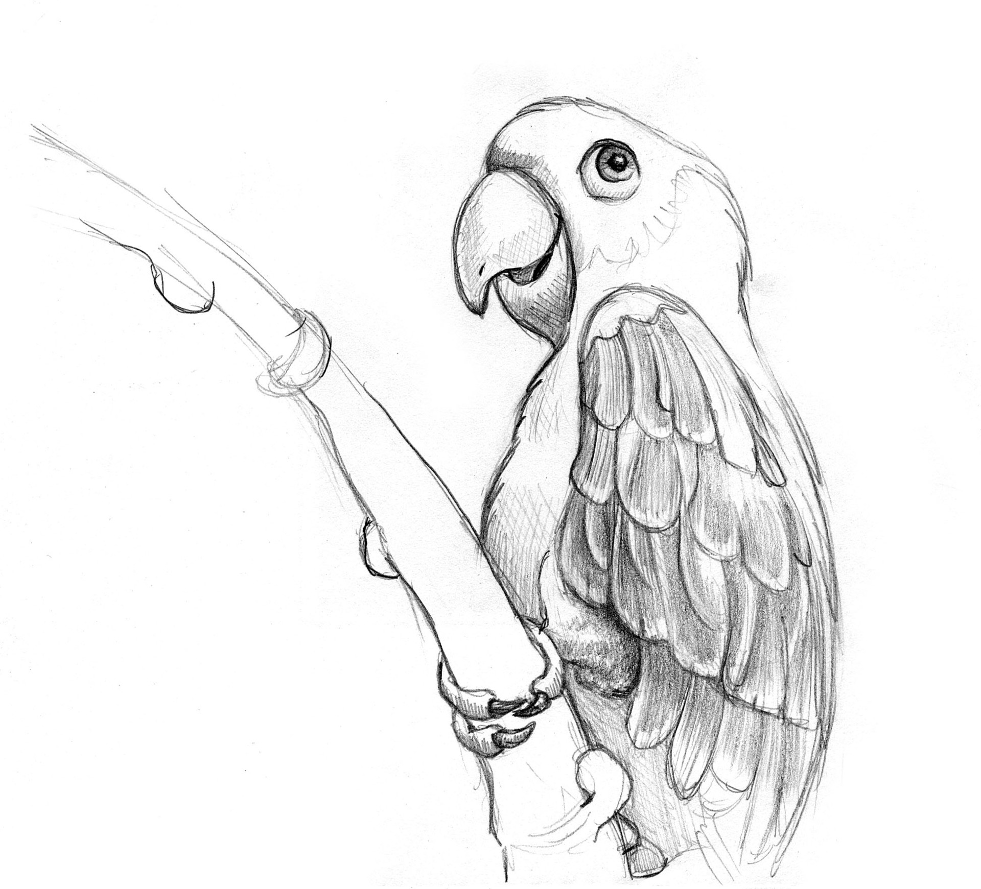 Patricia vasquez de velasco animales bocetos 03b