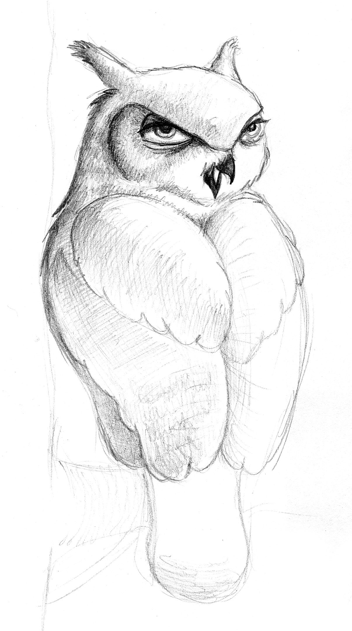 Patricia vasquez de velasco animales bocetos 01a