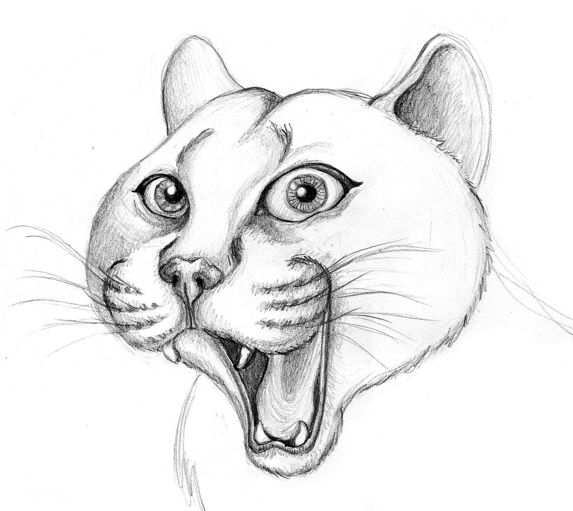 Patricia vasquez de velasco animales bocetos 02a