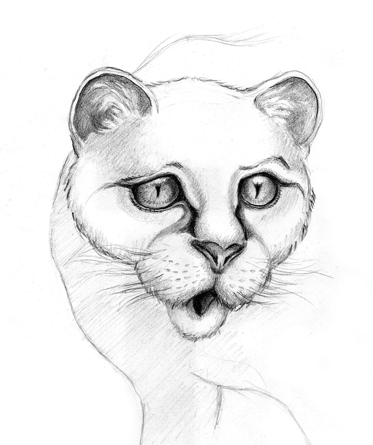 Patricia vasquez de velasco animales bocetos 03a