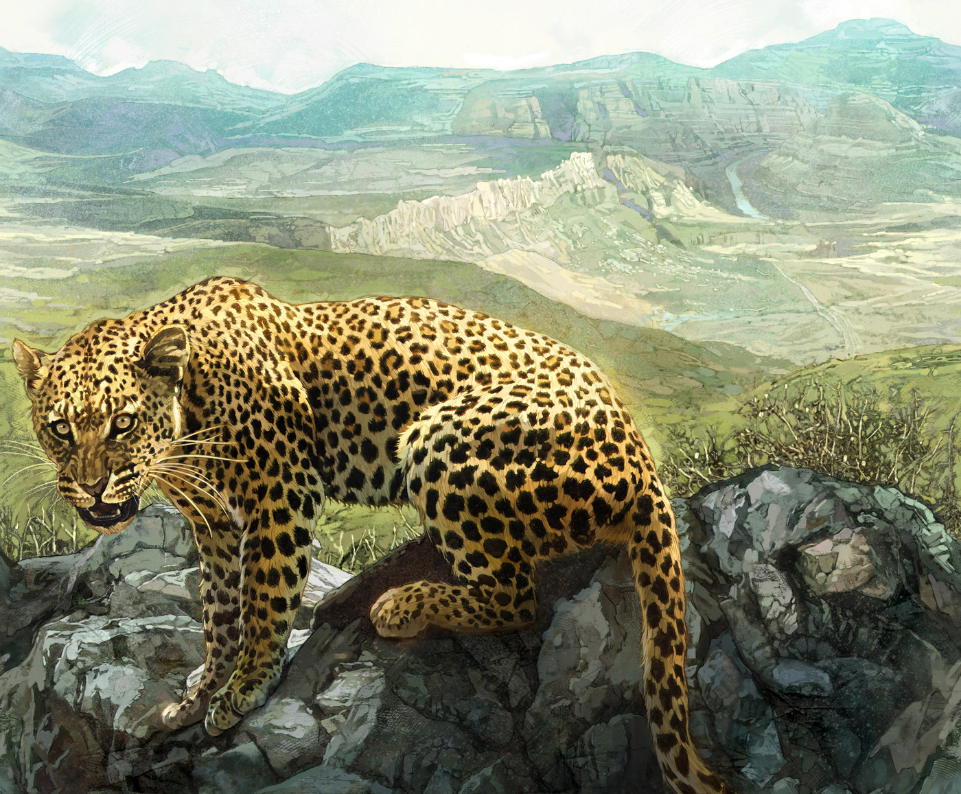 Kinsun loh leopard02