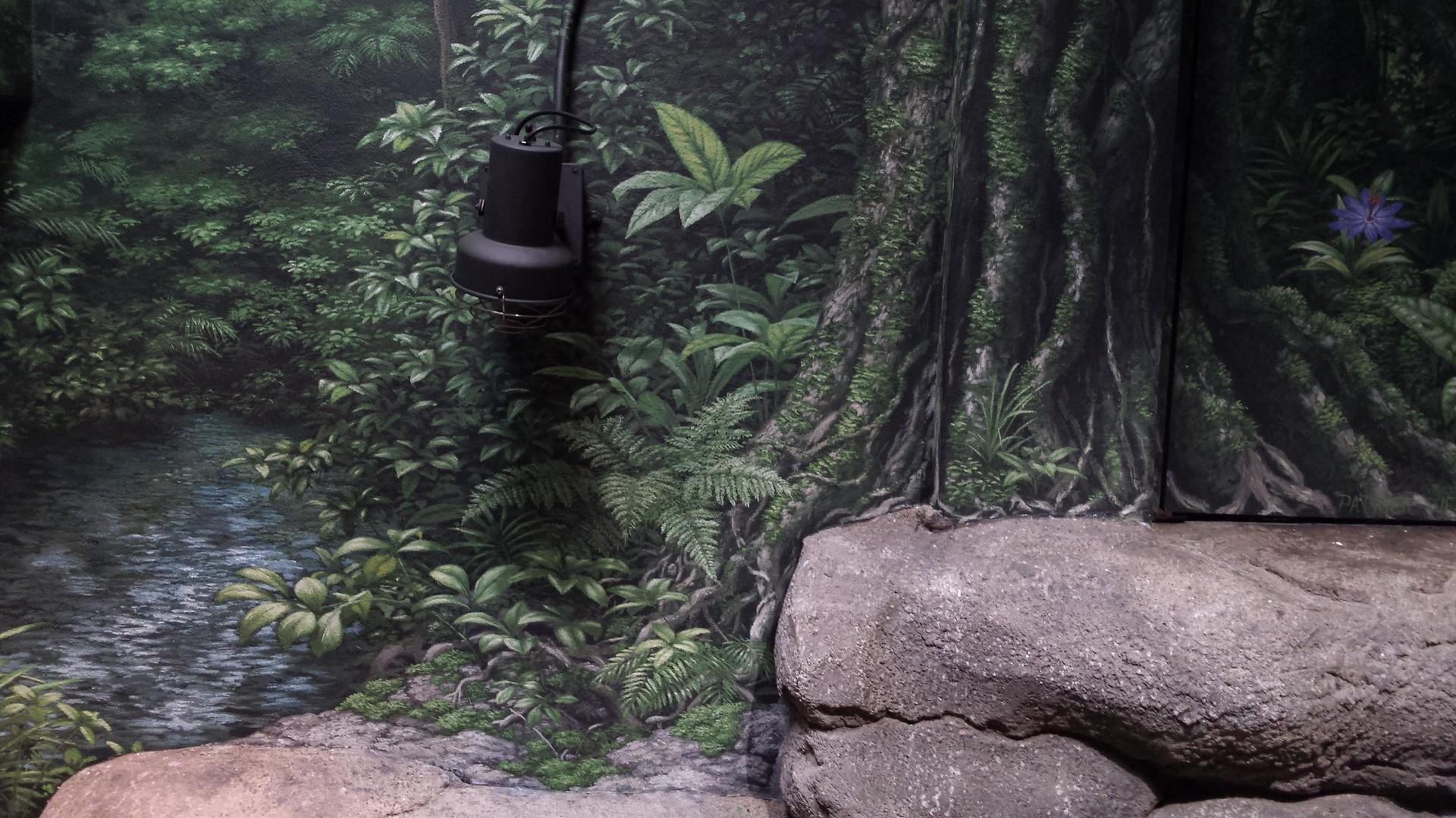 Patrick weck caiman lizard exhibit 4