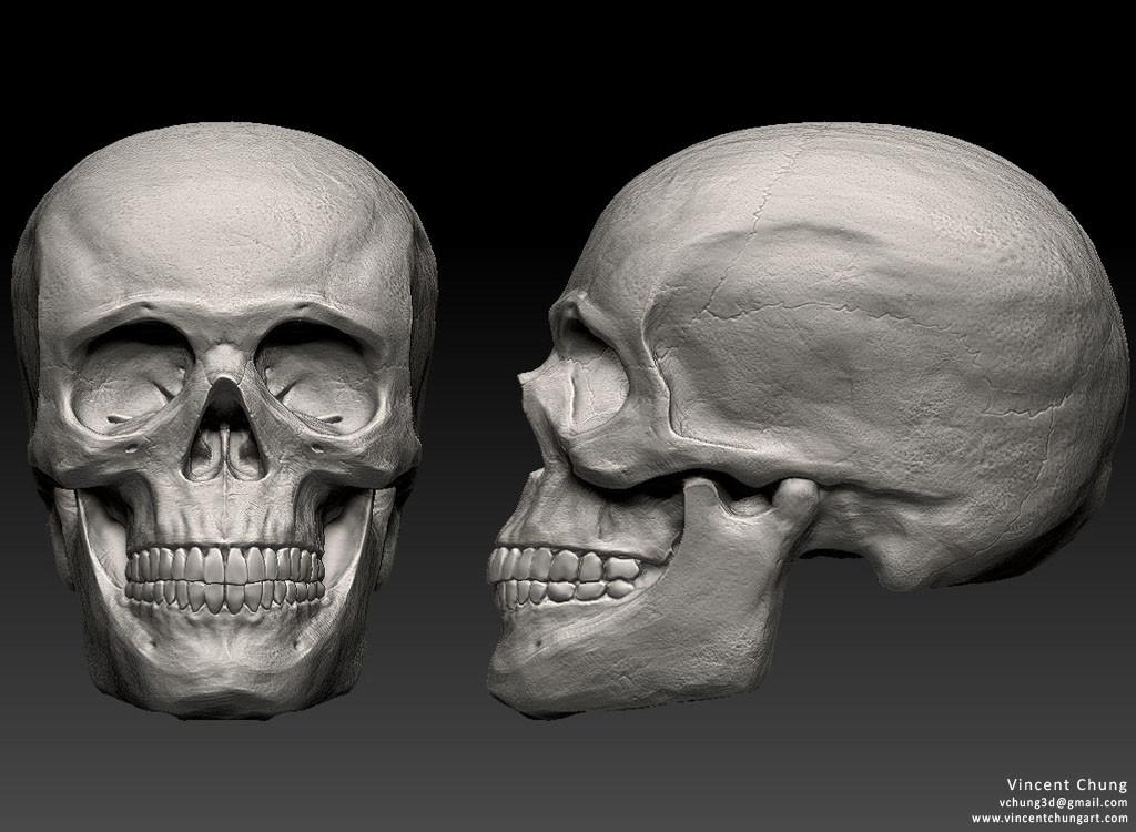 Vincent Chung Human Skull Study Life Demo To 3d Print